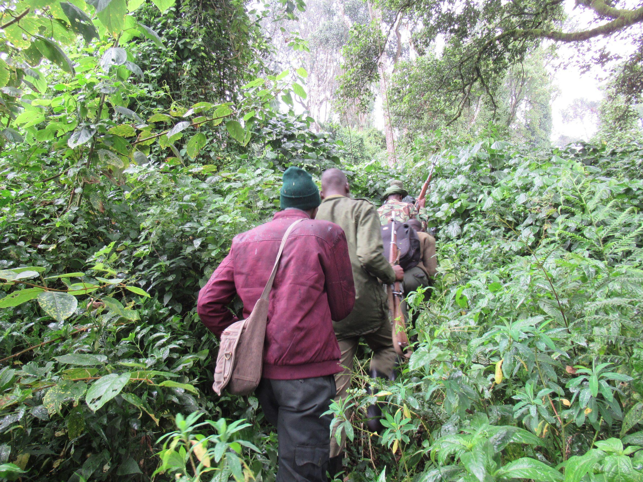 Aberdare National Park – Bongo Surveillance Project