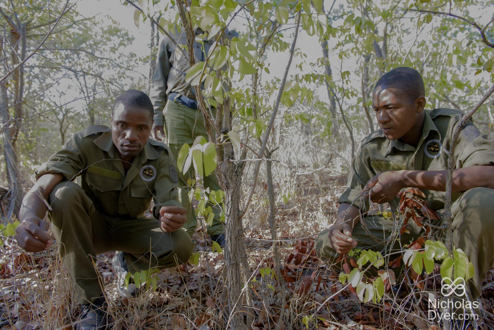 Hwange National Park Buffer Zone – Painted Dog Conservation