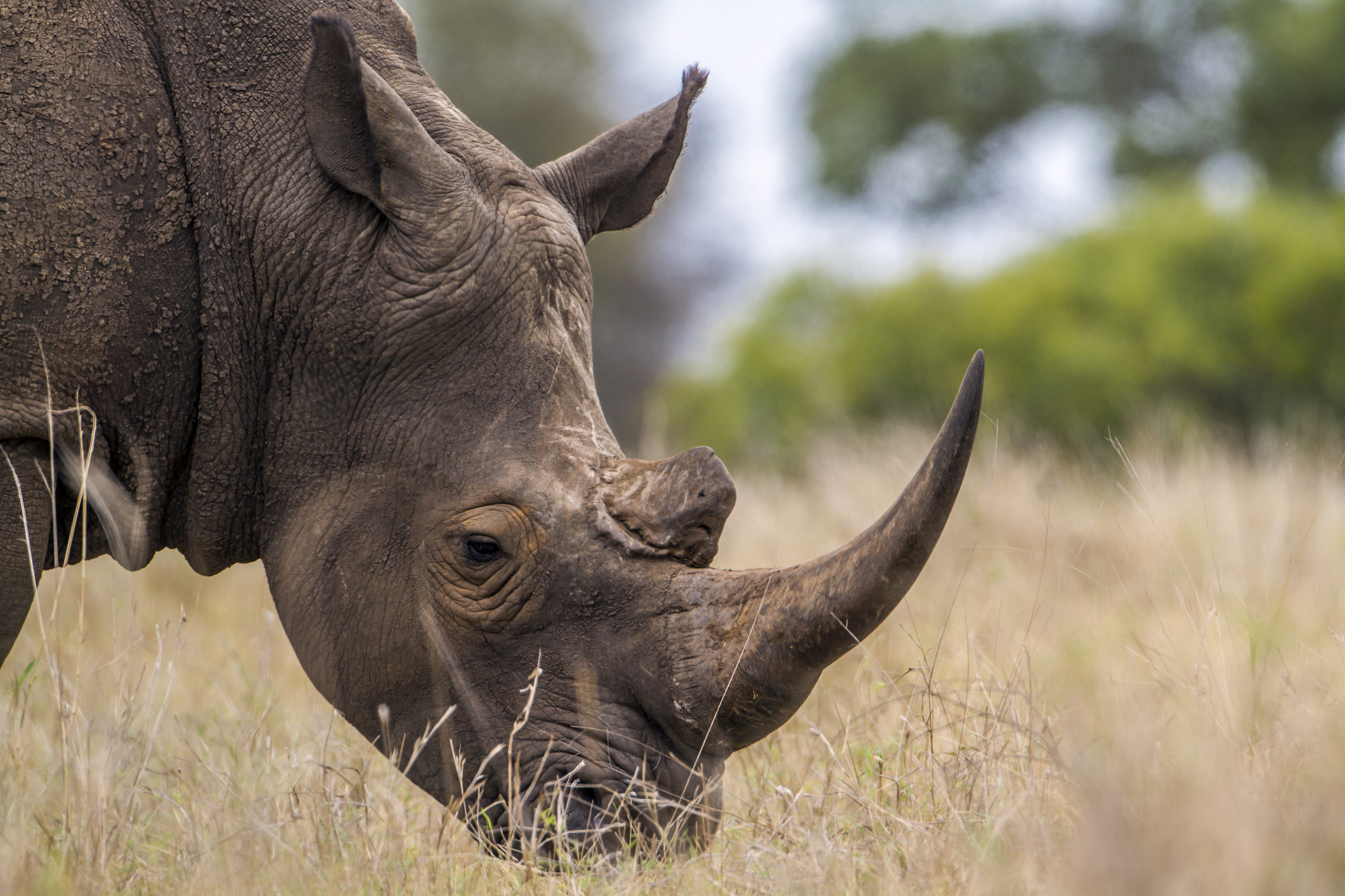 Kilimanjaro-Amboseli Biodiversity Ecosystem – Enduimet Community Wildlife Management Area