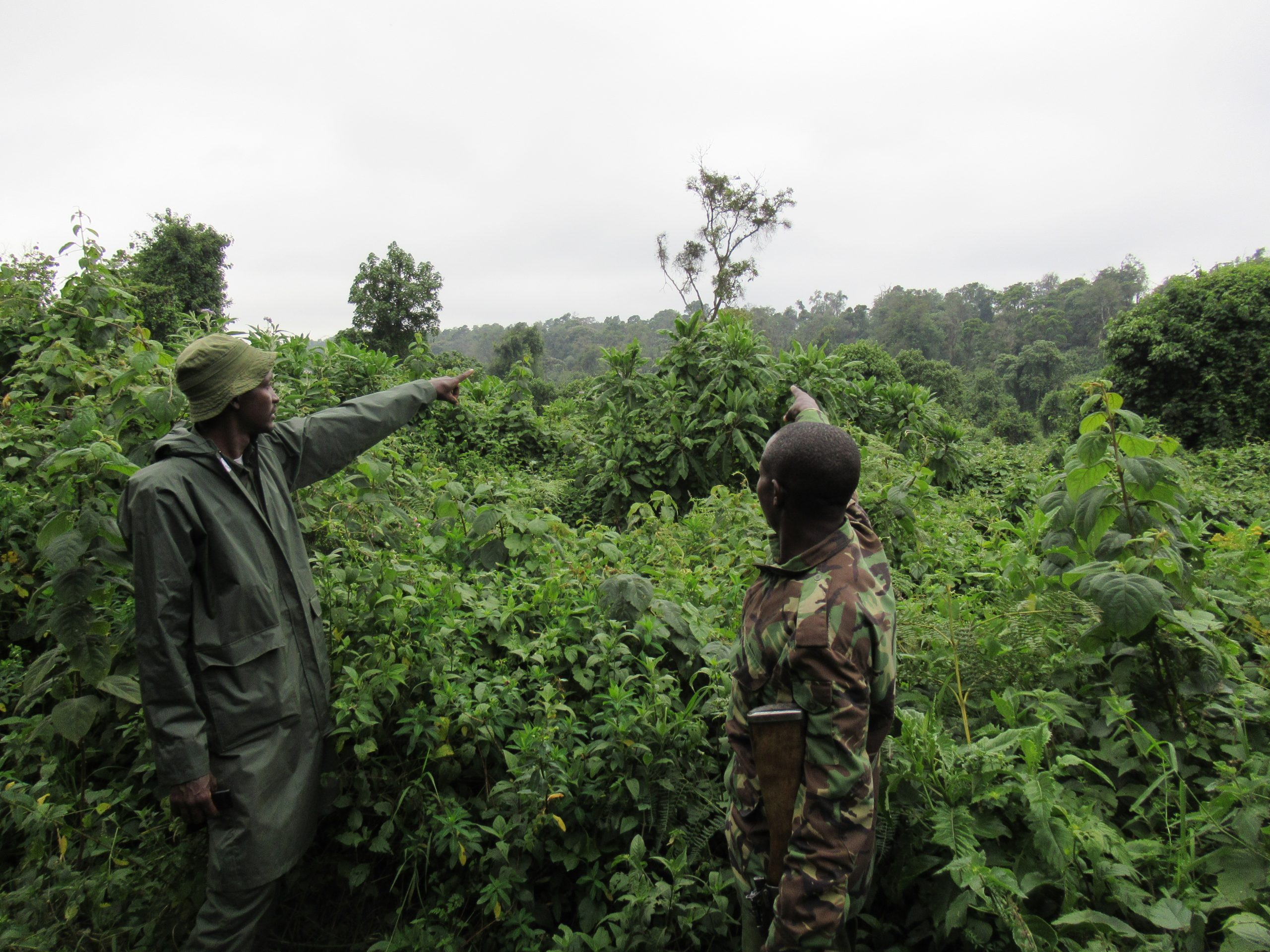 Mau Eburu Forest Reserve – Bongo Surveillance Project