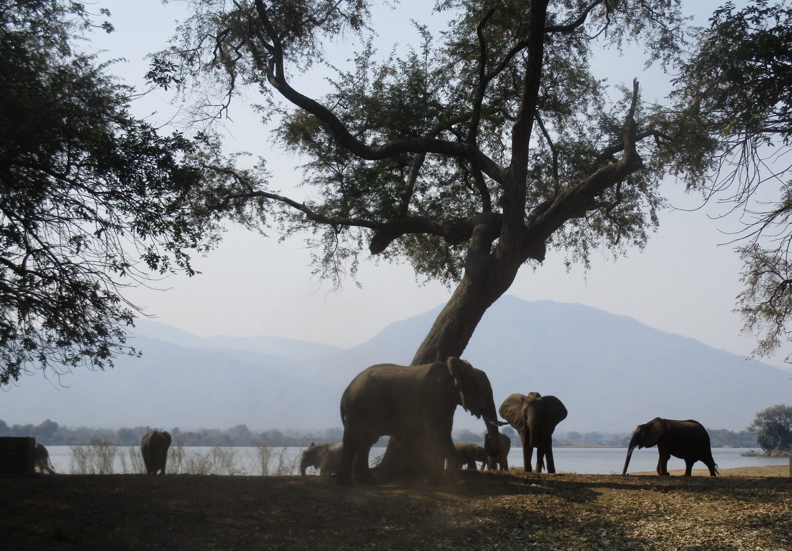 Mana Pools – The Tashinga Initiative