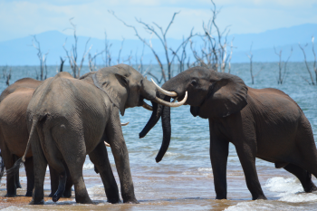 Charara Safari Area – The Tashinga Initiative