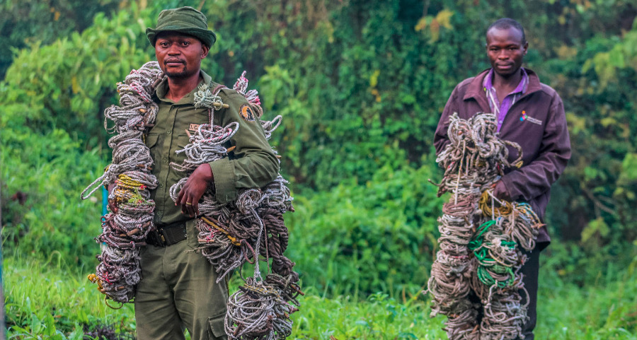 Virunga National Park – Virunga Foundation
