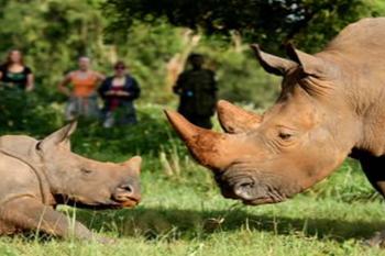 Ziwa Rhino Sanctuary – Uganda Conservation Foundation