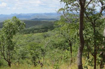 Doma Safari Area – Tashinga Initiative