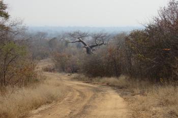 Dande Safari Area – Tashinga Initiative