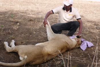 Kidepo Valley National Park – Uganda Conservation Foundation